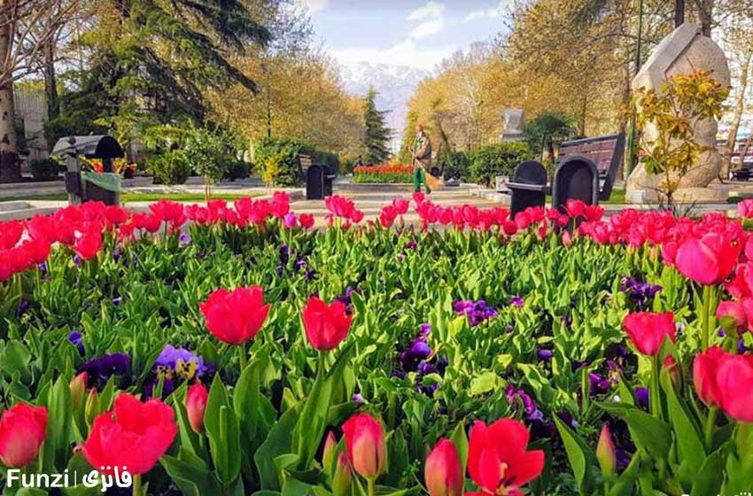 گل های لاله پارک ملت تهران