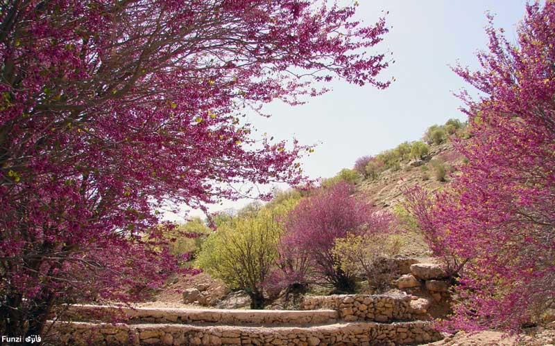 تنگه ارغوان استان ایلام