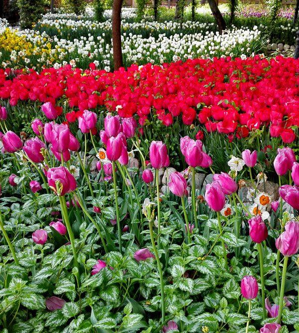 تهرانگردی در بهار