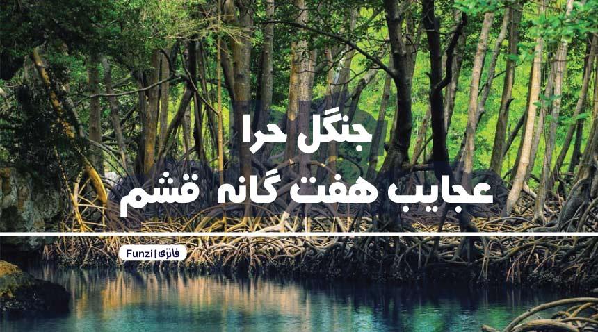 ویژگی های جنگل حرا