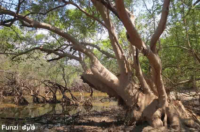 جنگل حرا در خلیج فارس