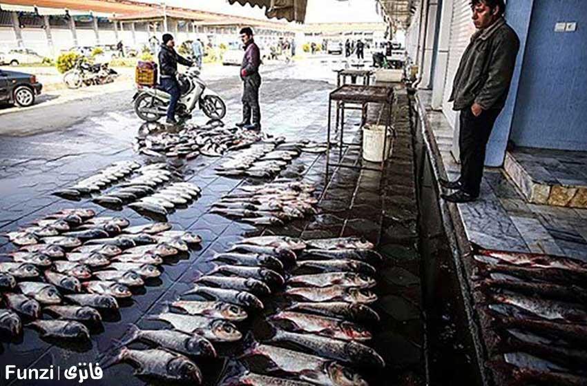 بازار ماهی فروشان ساری