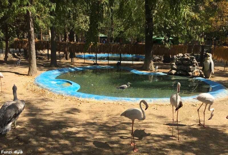 باغ پرندگان در پارك شهر