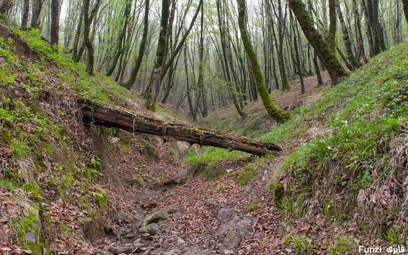جنگل النگدره گلستان