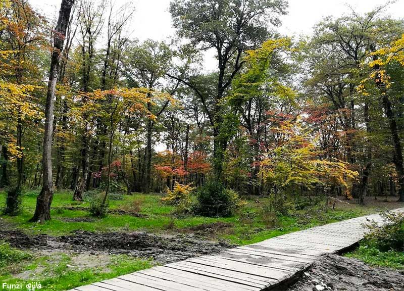 پاییز رنگارنگ پارک جنگلی النگدره
