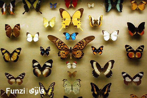 موزه حشرات | جاهای دیدنی تهران