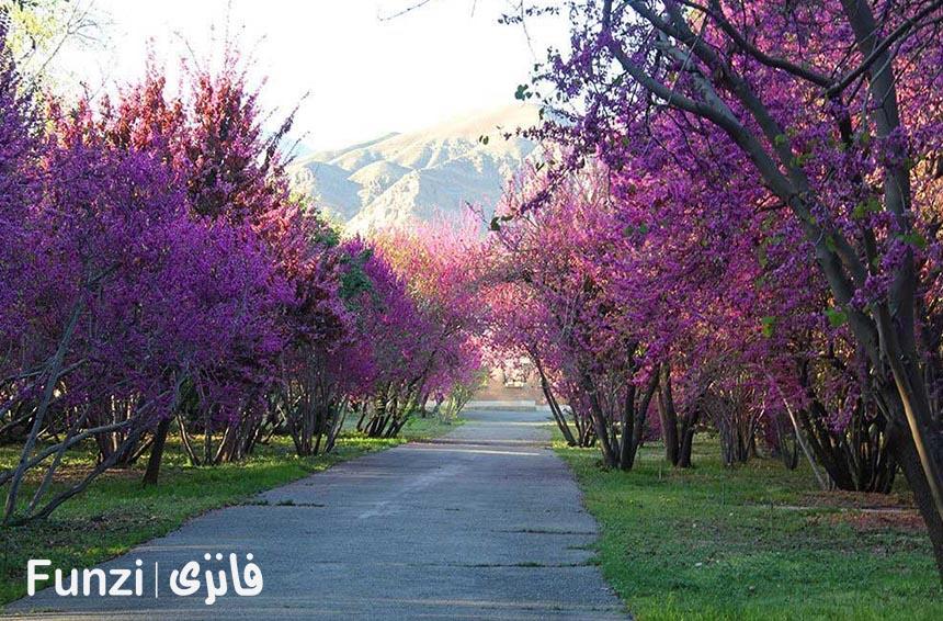طراحی متفاوت باغ گیاه شناسی تهران