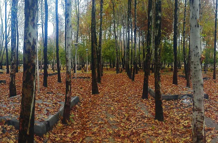 امکانات پارک جنگلی ناژوان funzi