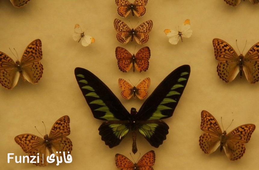 باغ موزه پروانه ها در پارک جنگلی ناژوان اصفهان فانزی