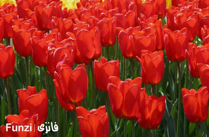 باغ گیاهان پیازی | باغ گلهای اصفهان فانزی