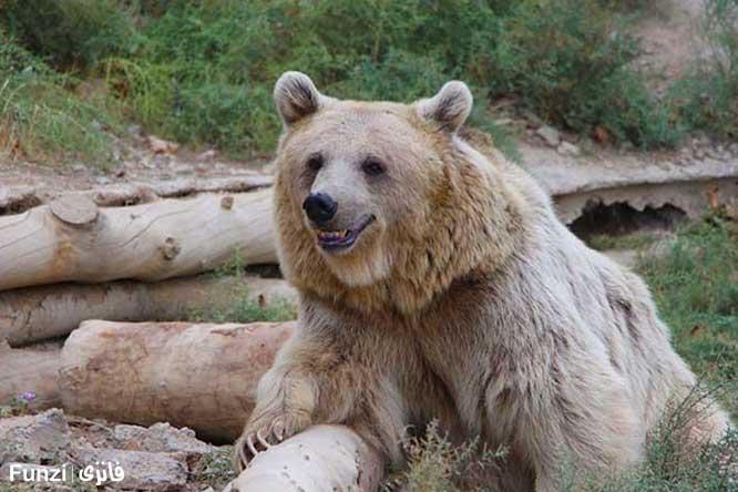خرس خندان باغ وحش اِرم