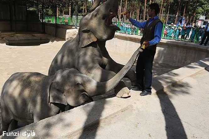فیل باغ وحش ارم
