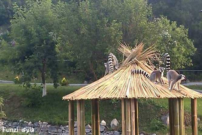 حیوانات باغ وحش ایروان