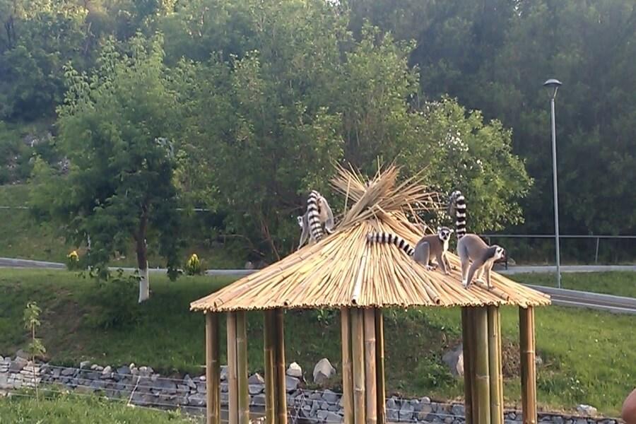 حیوانات باغ وحش ارمنستان