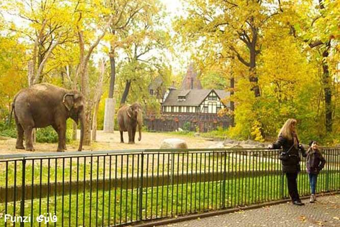 فیل باغ وحش برلین