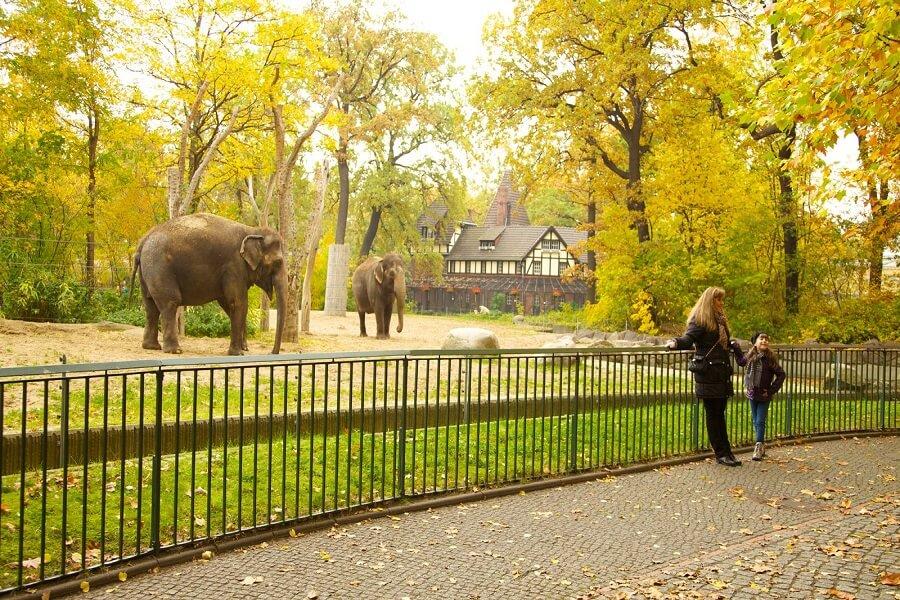 فیل از حیوانات باغ وحش برلین