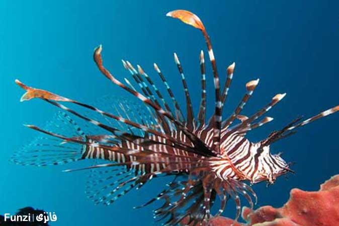 خروس ماهی آکواریوم اصفهان