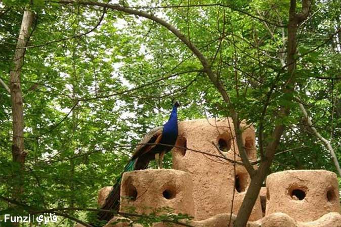 طاووس باغ پرندگان اصفهان | باغ پرندگان در اصفهان
