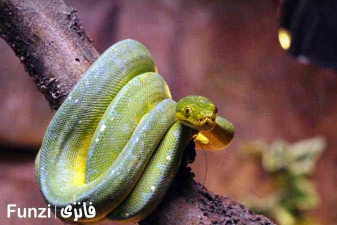مارهای خارجی باغ خزندگان اصفهان