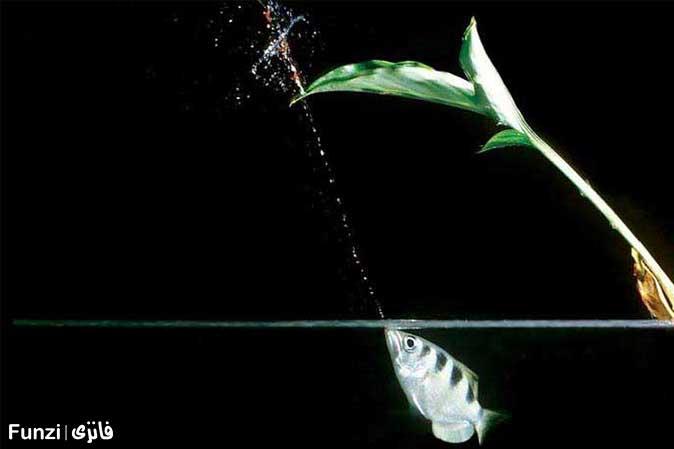 ماهی آب پاش در آکواریوم اصفهان