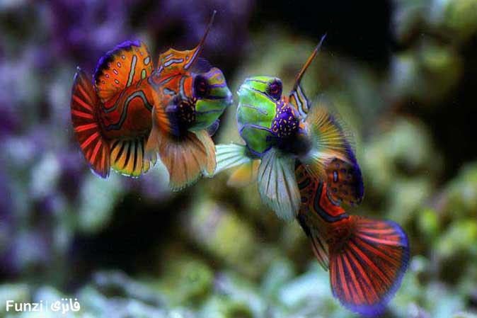 ماهی اژدهایی در آکواریوم اصفهان