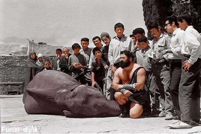 کشتی سیروس قهرمانی با فیل