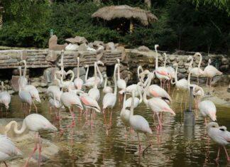 باغ پرندگان تهران لویزان