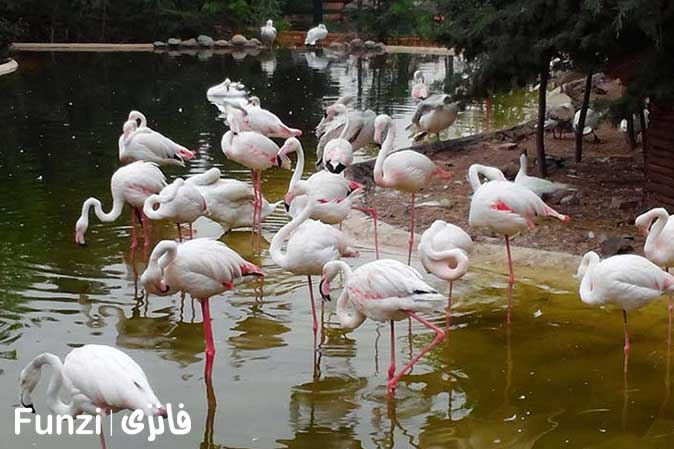 باغ پرندگان تهران پرنده