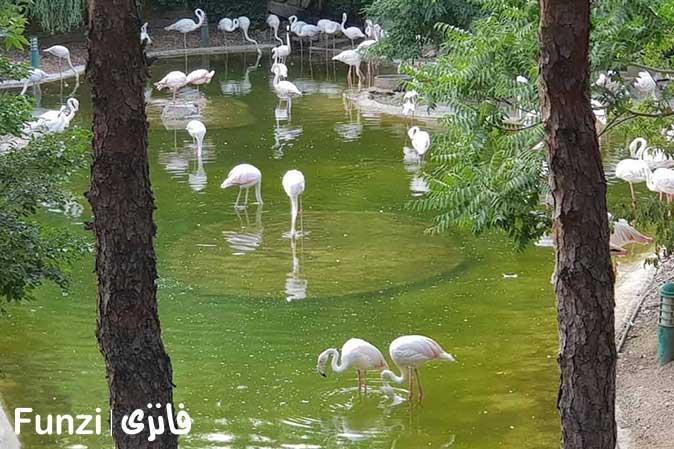 برکه باغ پرندگان تهران