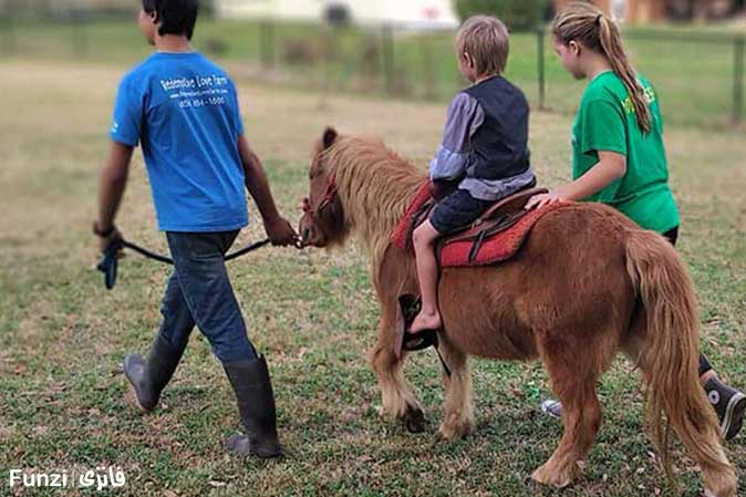سواری کودکان اسب پونی سوارکاری
