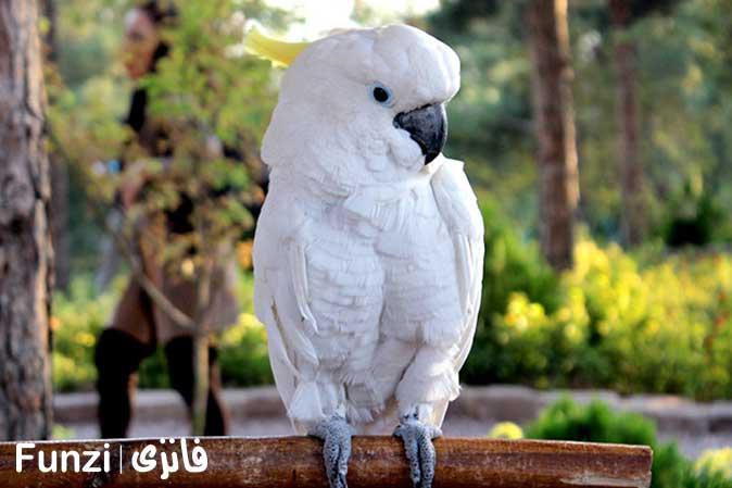 طوطی طاووس باغ پرندگان تهران