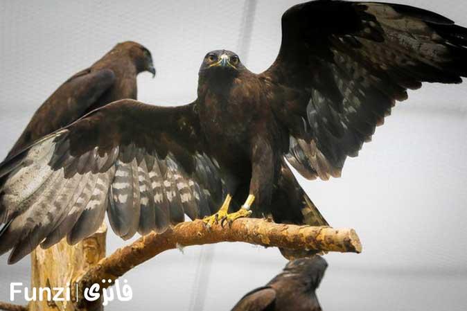 پرنده شکاری باغ پرندگان