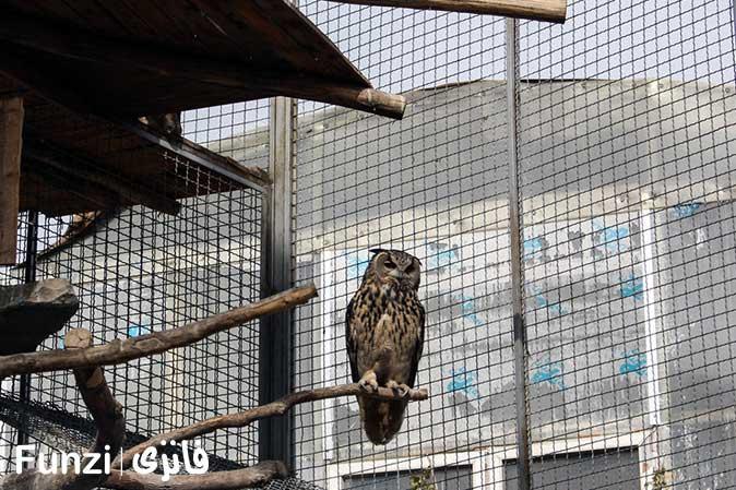 پرندگان استوایی باغ تهران