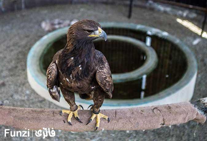 پرندگان- شکاری باغ وحش قزوین