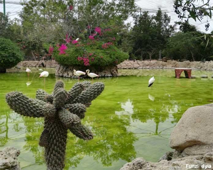 باغ زیبای اطراف دلفیناریوم کیش
