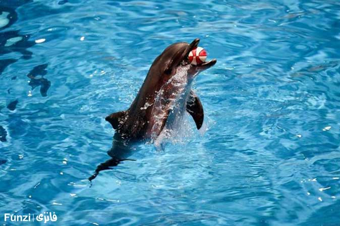دلفین های دلفیناریوم برج میلاد