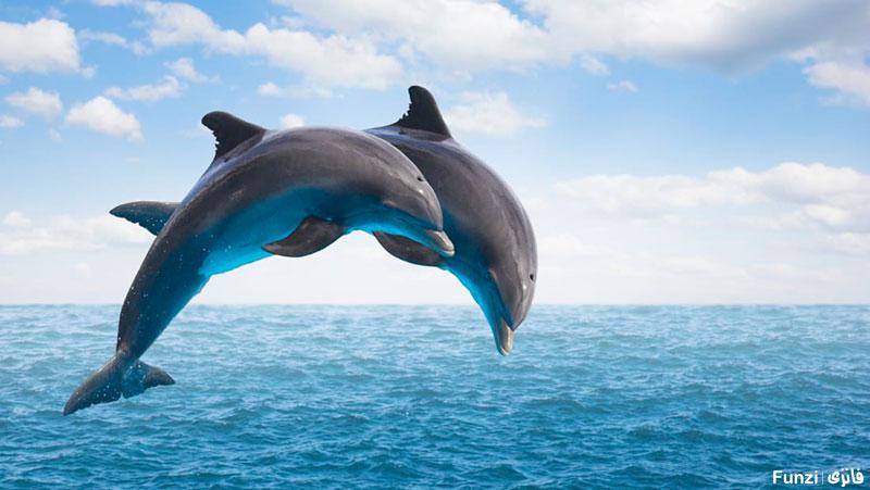 دلفین ها در حال جهش در دریا