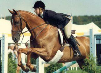 آموزش اسب سواری 4