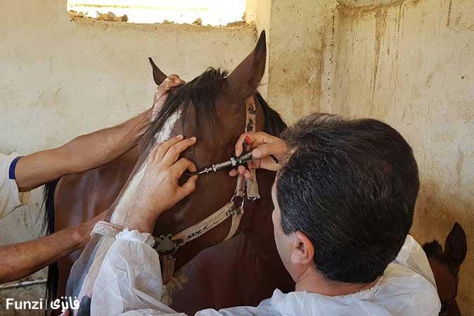 تیمار کردن اسبی در کنار اسبی دیگر در آموزش سوار کاری