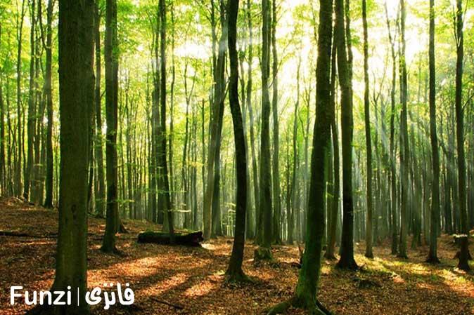 تفریح در جنگل | یک پیشنهاد برای تفریح